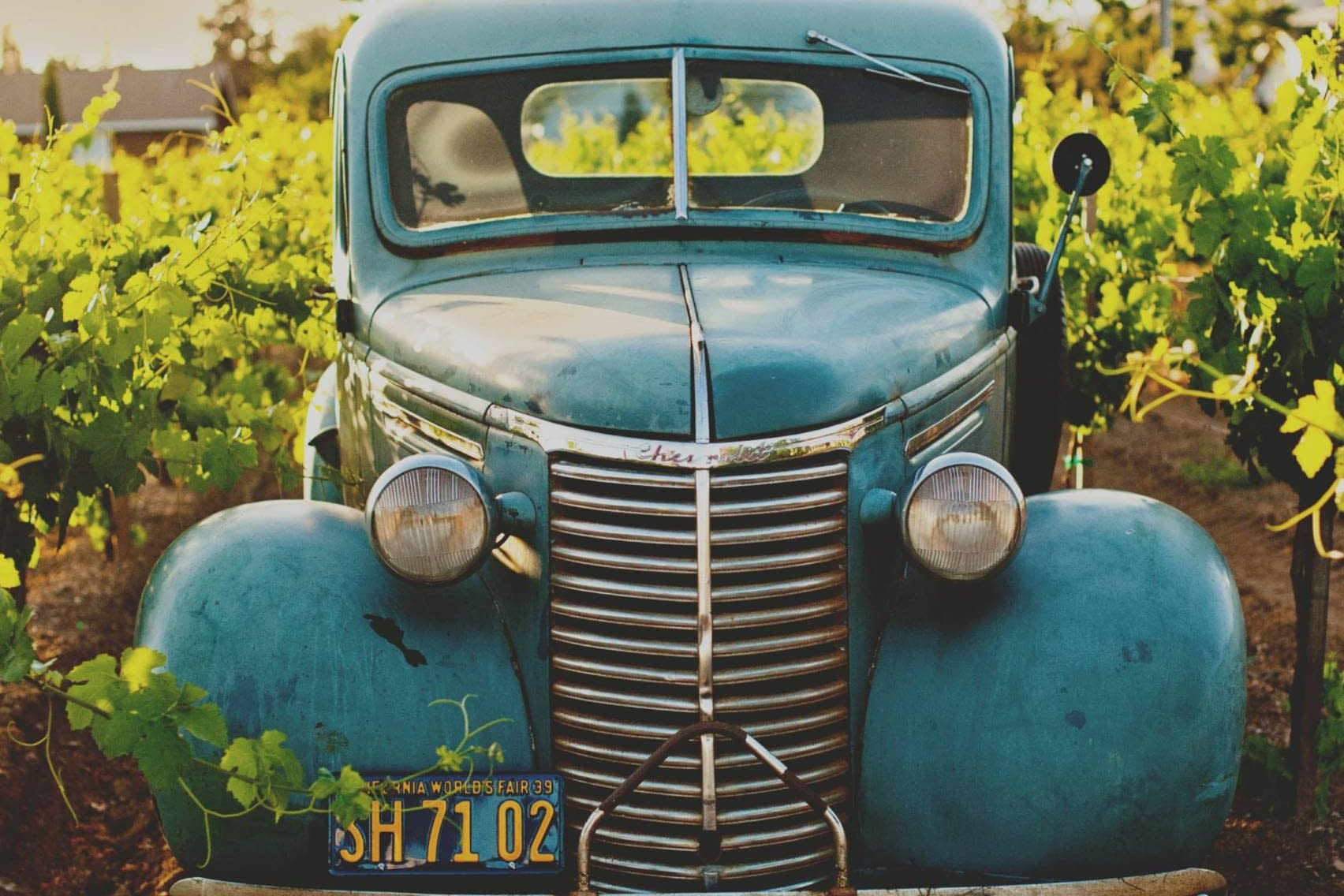 A vintage truck parked in a vineyard