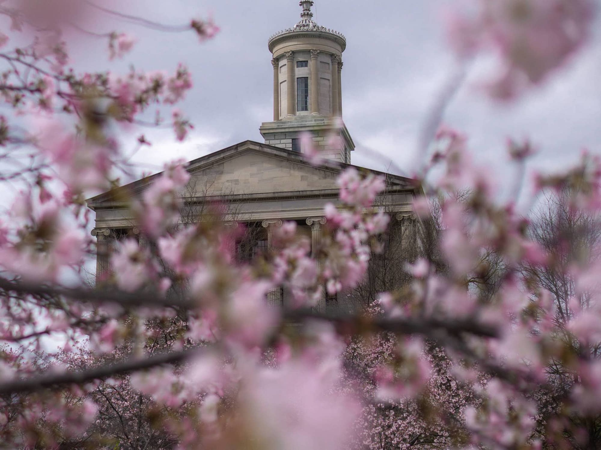 An awesome shot of the State Capital in Nashville covered by cherry blossoms